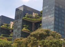 Trees planted on high-rise terraces