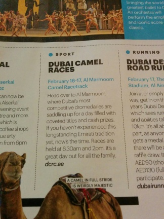 Camel race date aoounced